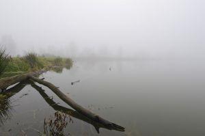 Mist-004.jpg