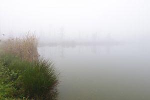 Mist-017.jpg